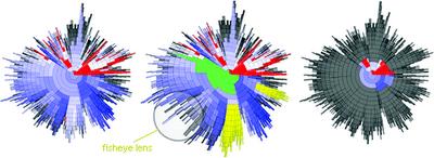 Radial clustergram